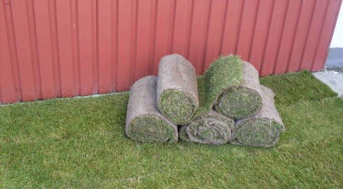 Græsplæne_rullegræs