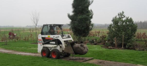 plantning_af_store_træer2