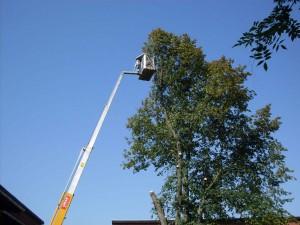Træets højde er ingen hindring. Vi har det udstyr der skal til opgaven.