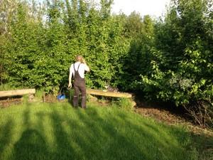 Vildthegn udført i diverse frugtbærende buske og træer.