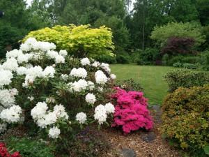 Plantekomposition i prydhave. Bemærk anvendelsen af farvet løv (grønne, gule og røde nuancer), samt blomstrende Rhododendron.